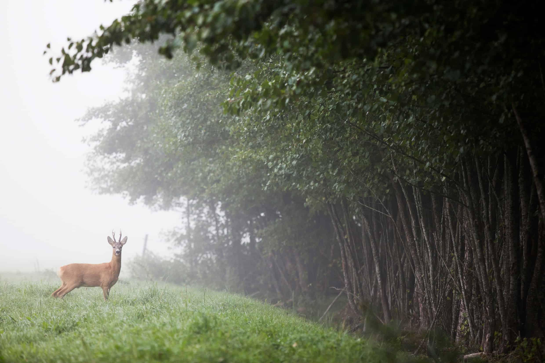 Zweden telt 29 Nationale Parken en om en bij de 4.000 natuurreservaten. Foto: Melker Dahlstrand/imagebank.sweden.se