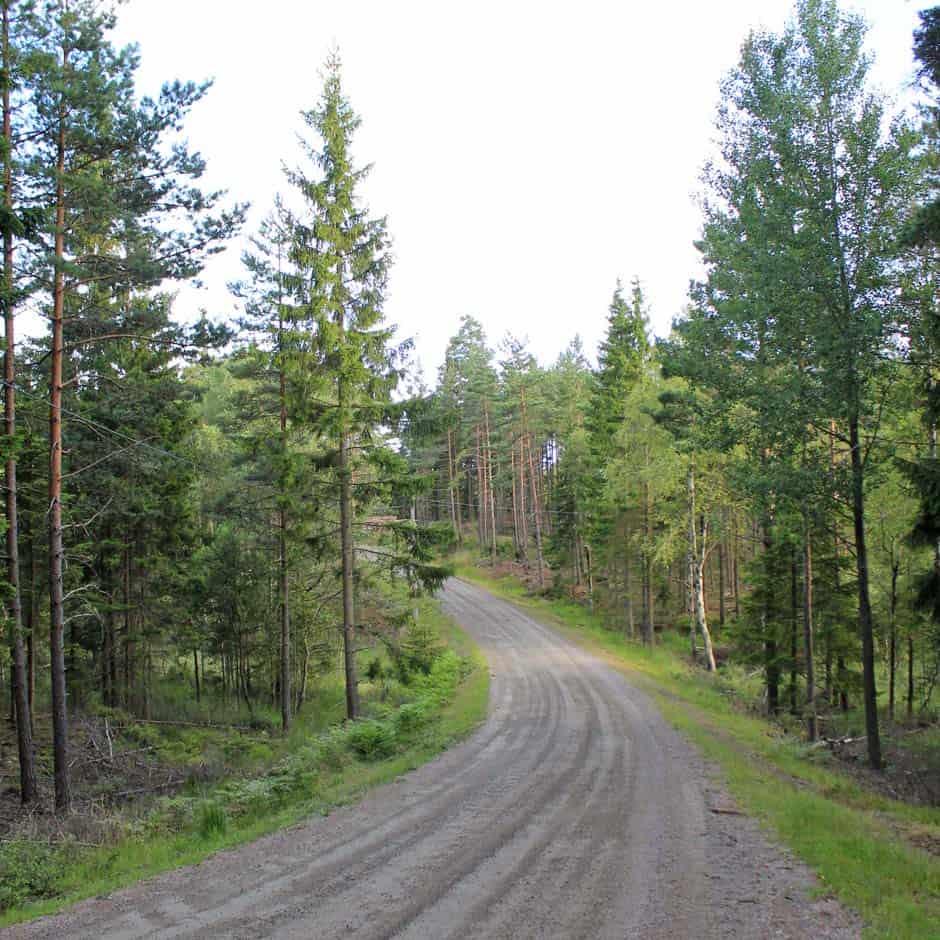Zweedse bossen