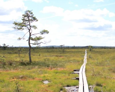 Store mosse national park